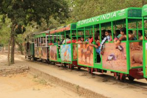 Picture of toy train at Lucknow zoo park.