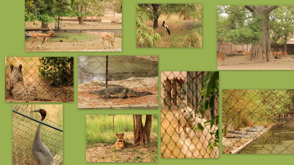 Collage of pictures taken at Lucknow zoological garden