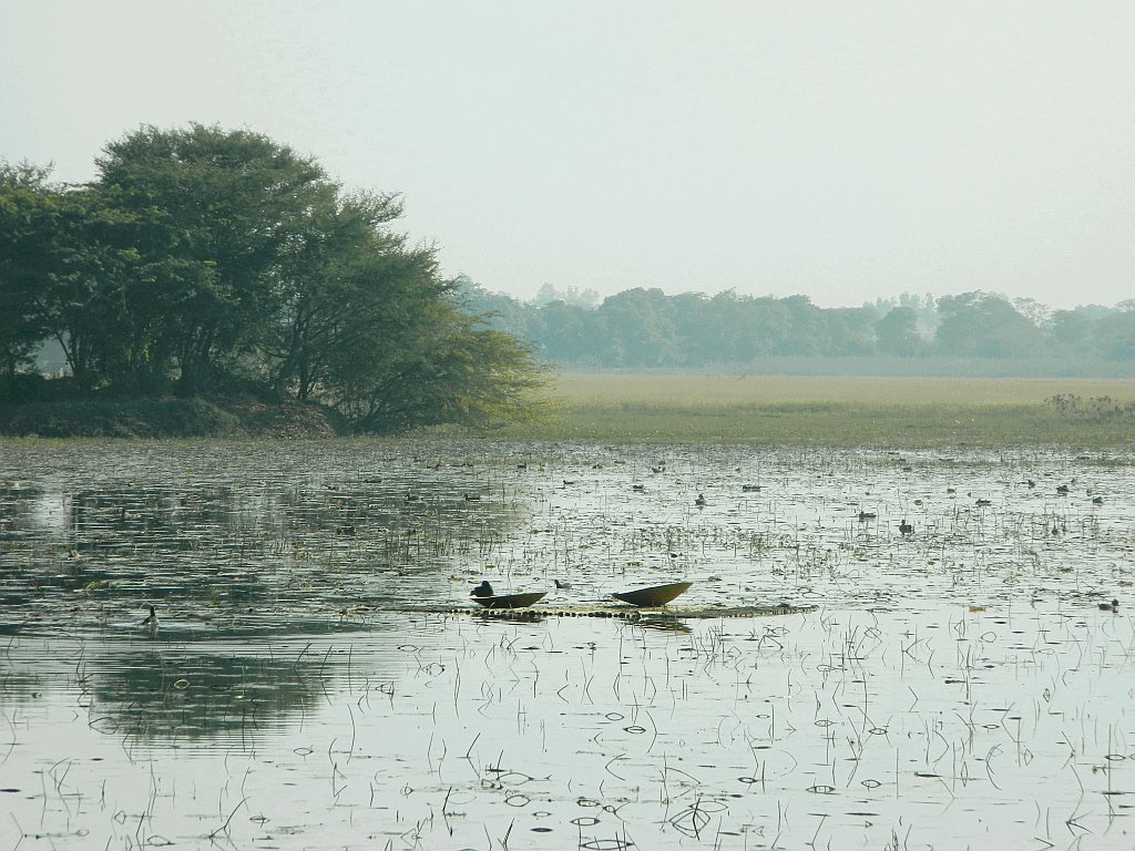 Nawabganj Bird Sanctuary